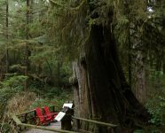 Wanderweg im Regenwald, Pacific Rim MP, BC