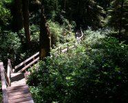 Trail im Regenwald in Tofino, BC